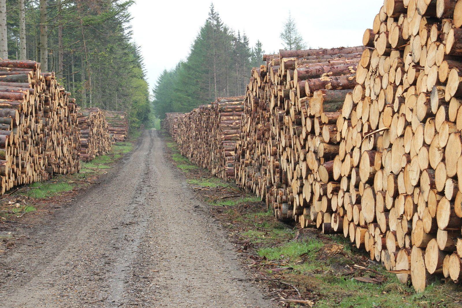 Køb / Salg af træ og flis - Alstrup Skovservice ApS